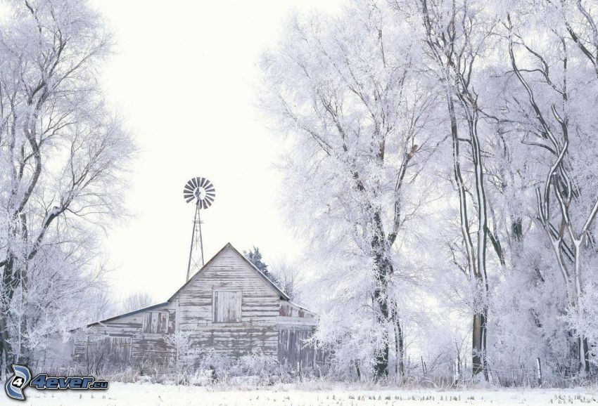 hus, snöklädda träd, snö, väderkvarn
