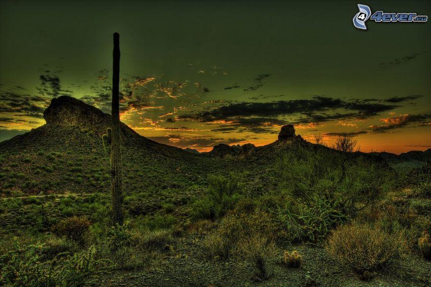 kaktus, kulle, efter solnedgången