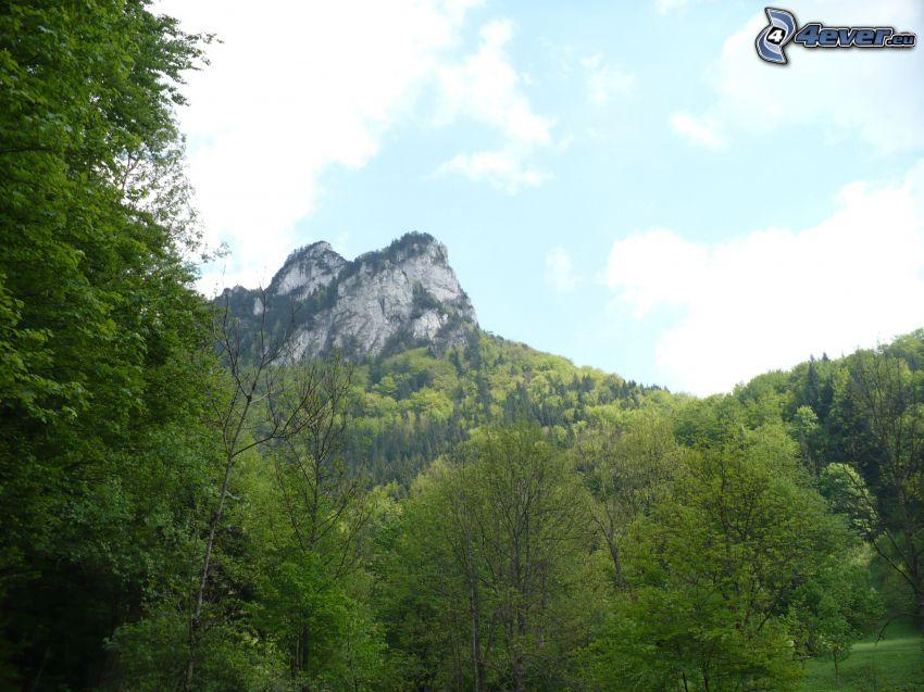 klippigt berg, träd
