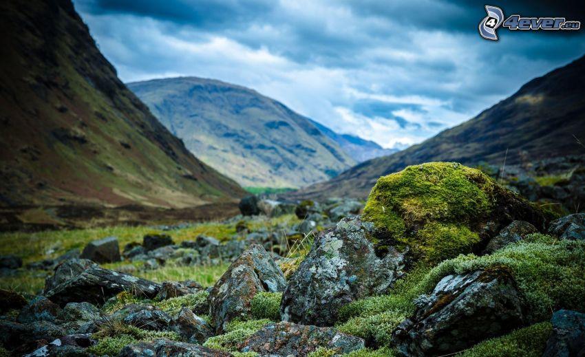 klippor, mossa, kullar