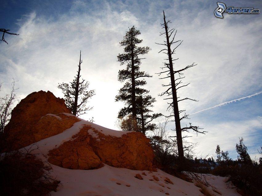 klippor, snö, uttorkade träd