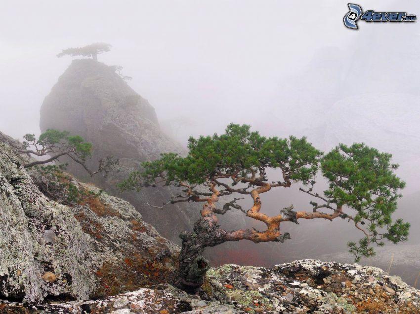 klippor, träd, dimma