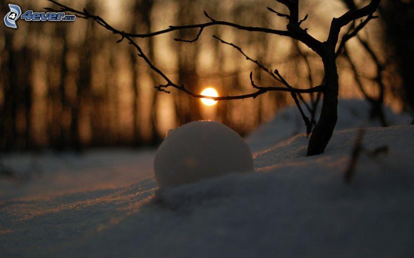 klot, snö, gren, solnedgång på vintern