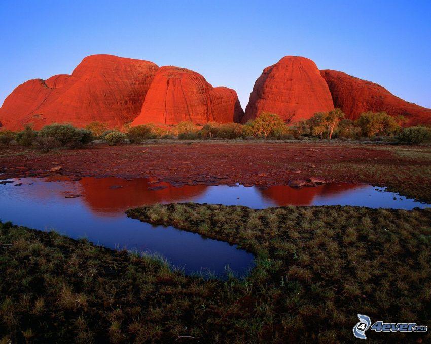 kullar, vattenpöl, träd, Australien