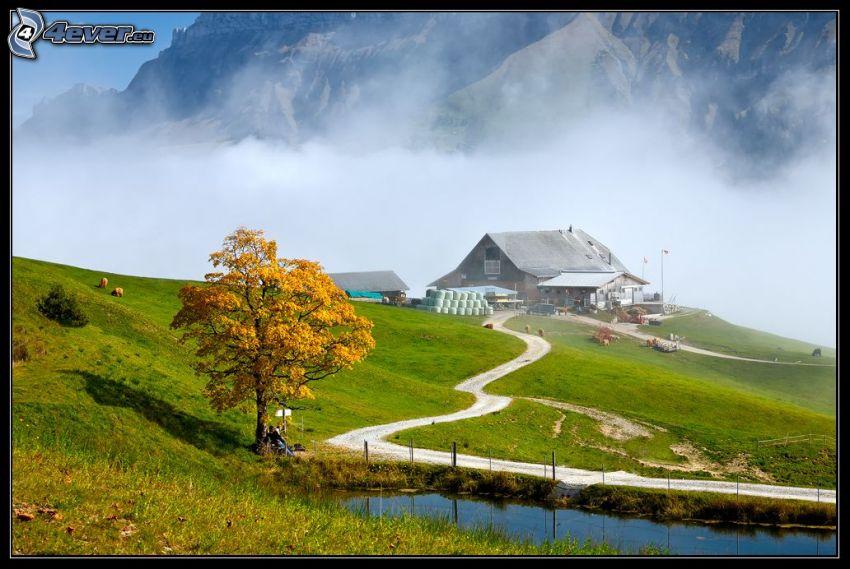 kulle, gult träd, hus, sjö, klippor