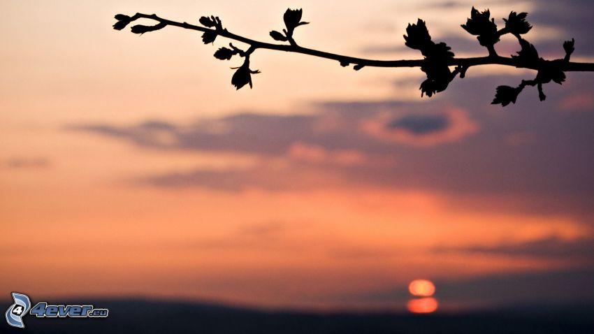 kvist, lila himmel