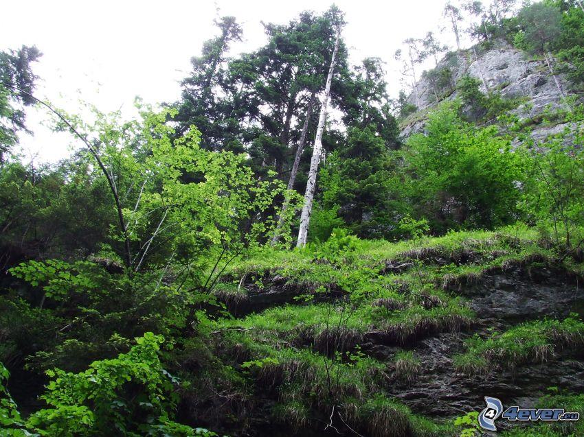 landskap, klippor, träd, grönska