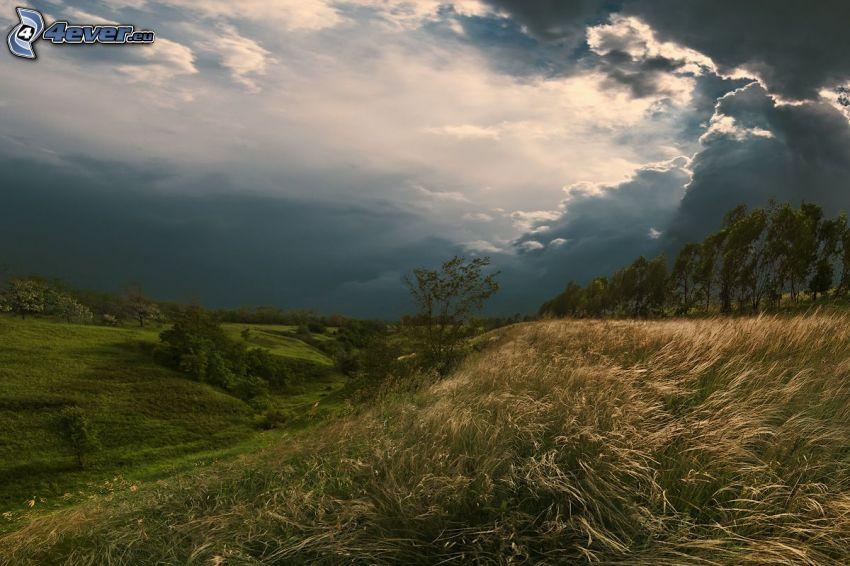 äng, högt gräs, träd, moln, solstrålar