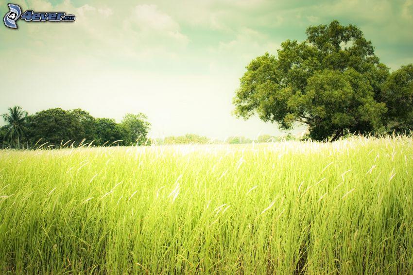 äng, träd, högt gräs