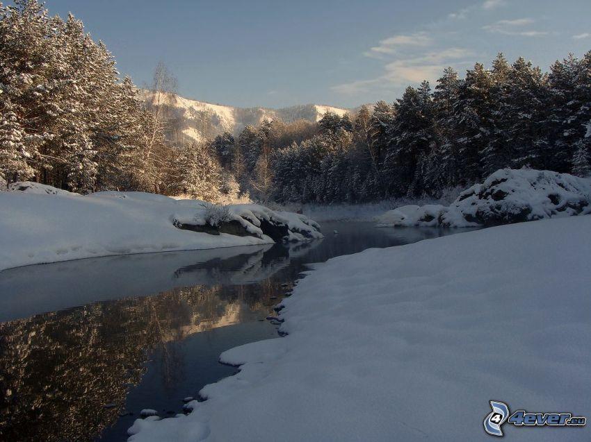 bäck, snöigt landskap, snöklädda träd