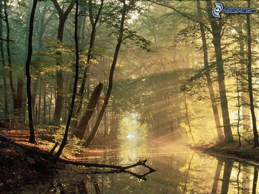 bäck i skogen, solstrålar, träd vid flod