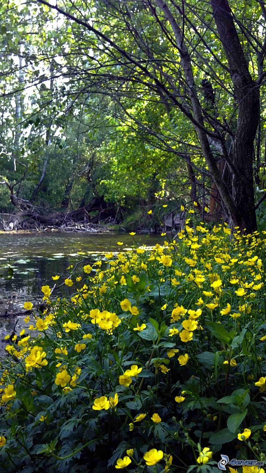 blommor, bäck, lövträd