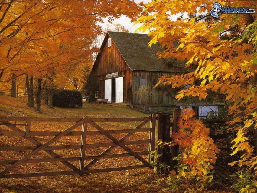 bondgård, gula träd, trästaket