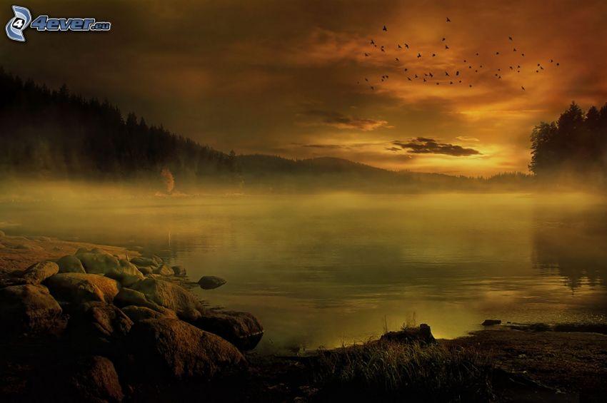 dimma över sjö, skog