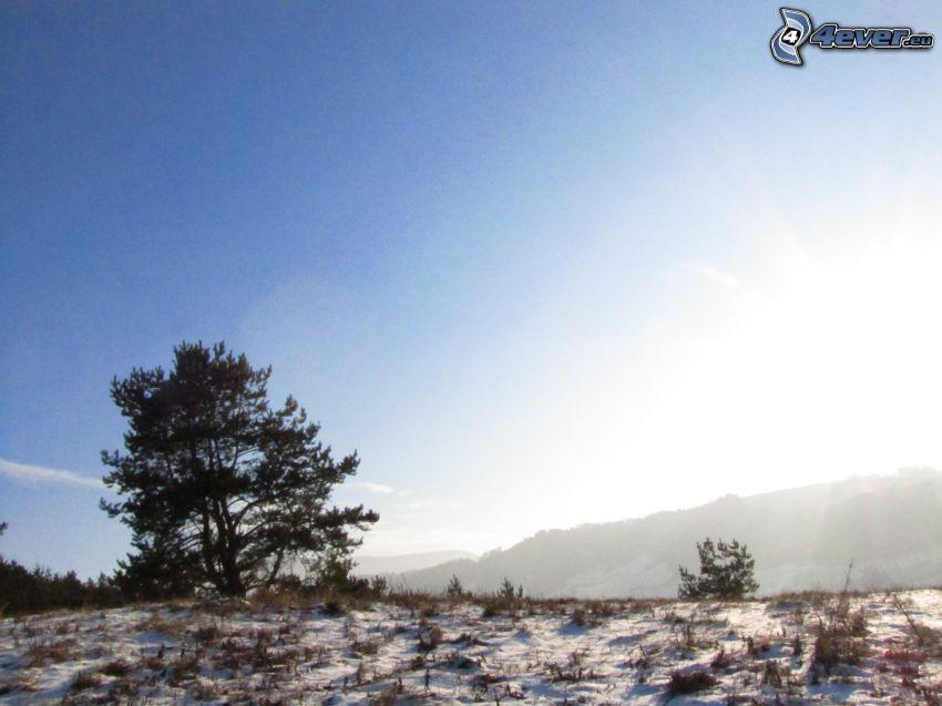 ensamt träd, snö, himmel, sol, utsikt