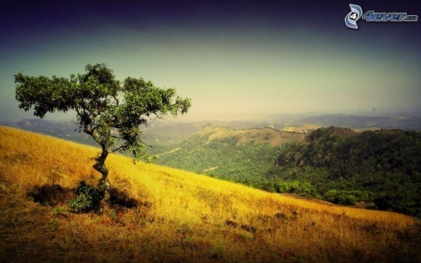 ensamt träd, torrt gräs, utsikt över landskap