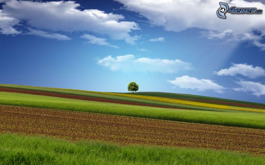 fält, ensamt träd, moln