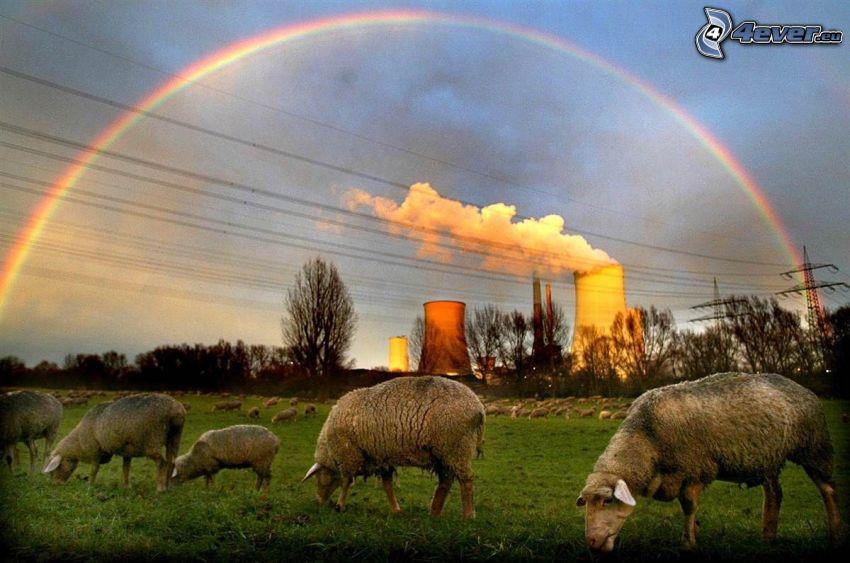 får, fabrik, äng, regnbåge, skorsten