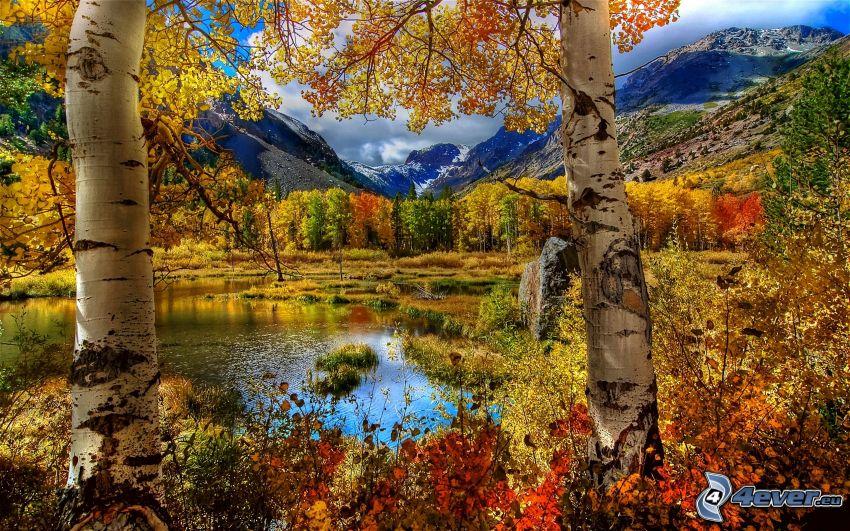 färggrann skog, björkar, sjö i skogen, berg, höst