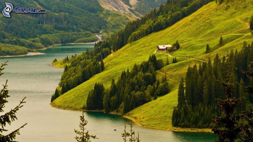 flod, kullar, barrträd, hus
