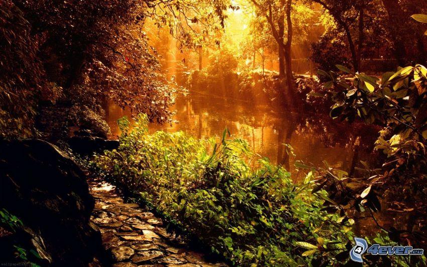 flod, solstrålar, trottoar, grönska