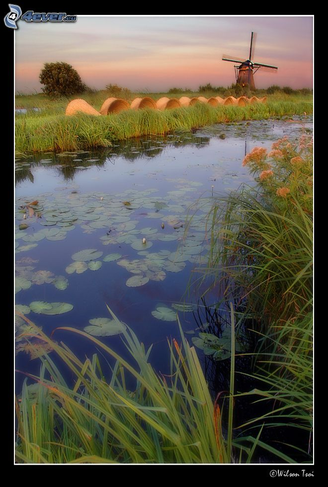 flod, väderkvarn, hö, Nederländerna