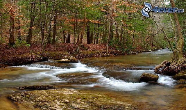 flod i skog, stenar, bäck, höst