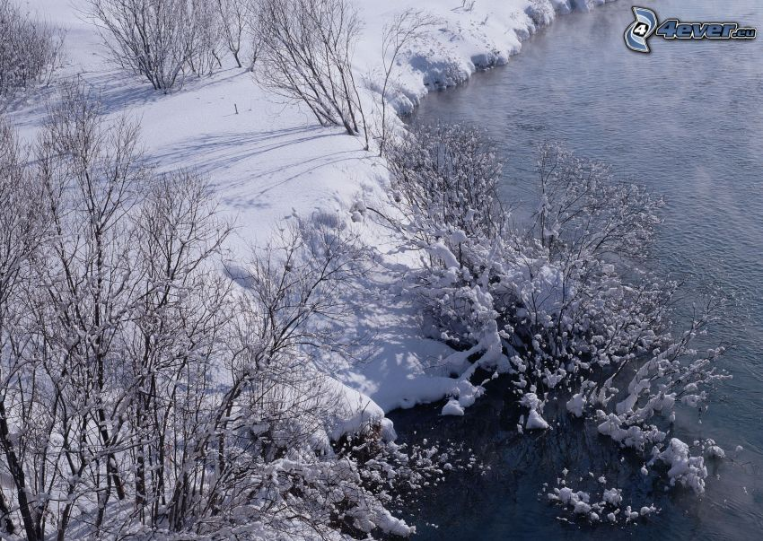 flod på vintern, bäck, snö, buskar