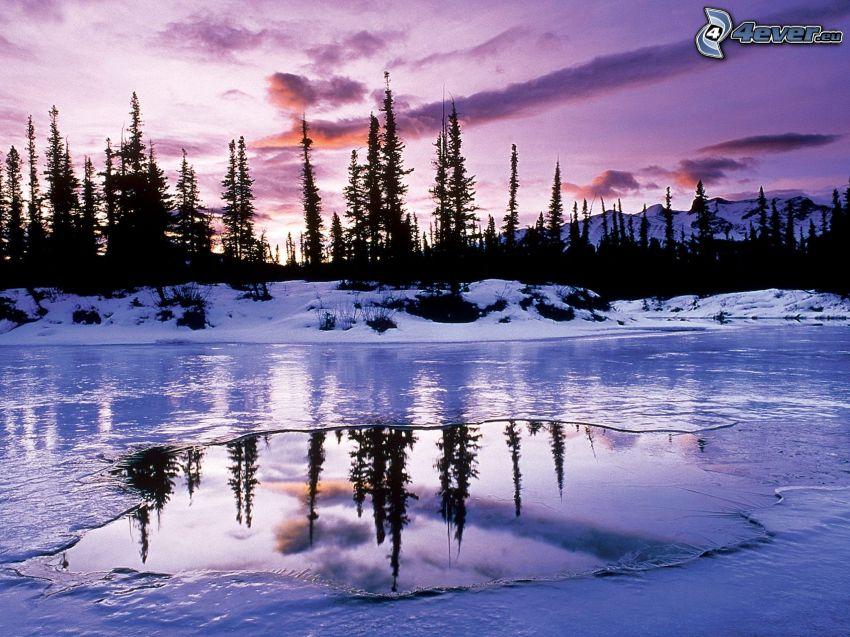 frusen sjö, siluetter av träd, lila himmel
