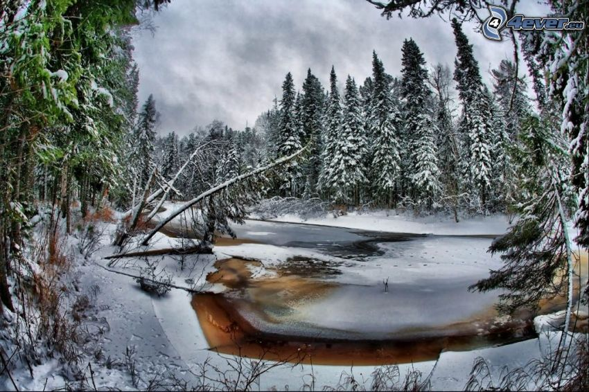 fryst bäck, skog