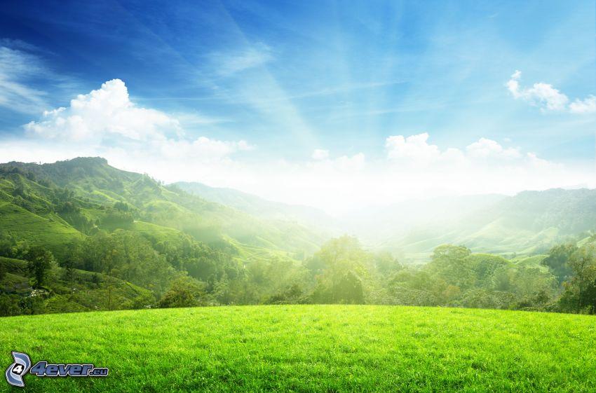 grön äng, kullar, solsken, skog, himmel