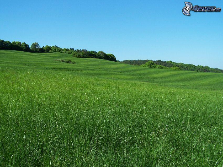 grön äng, skog, blå himmel