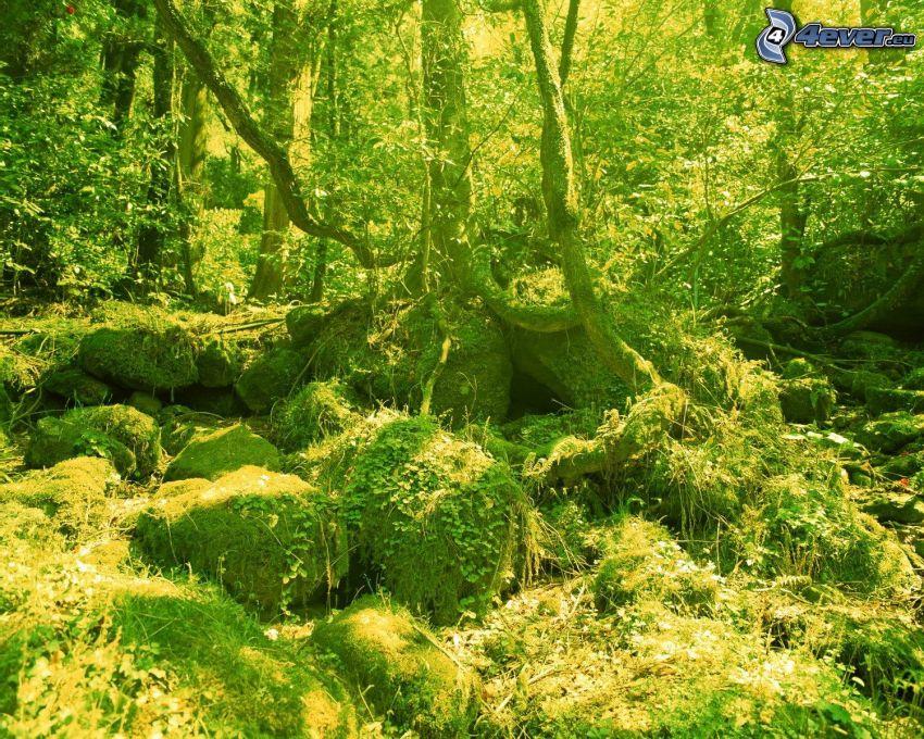 grön natur, skog, stenar, träd, mossa