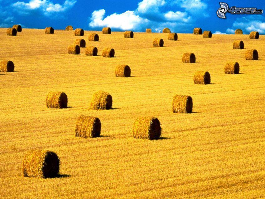 hö efter skörd, gult fält