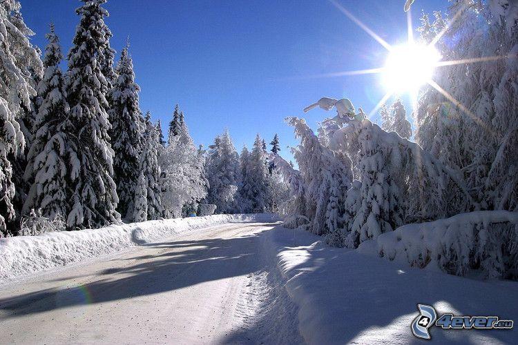 Höga Tatras, snöig väg, snöklädda träd, sol, solstrålar