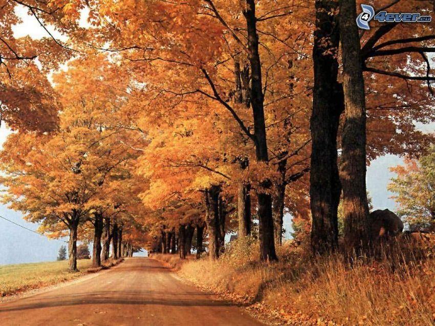 höstväg mellan träden, Kanada, löv