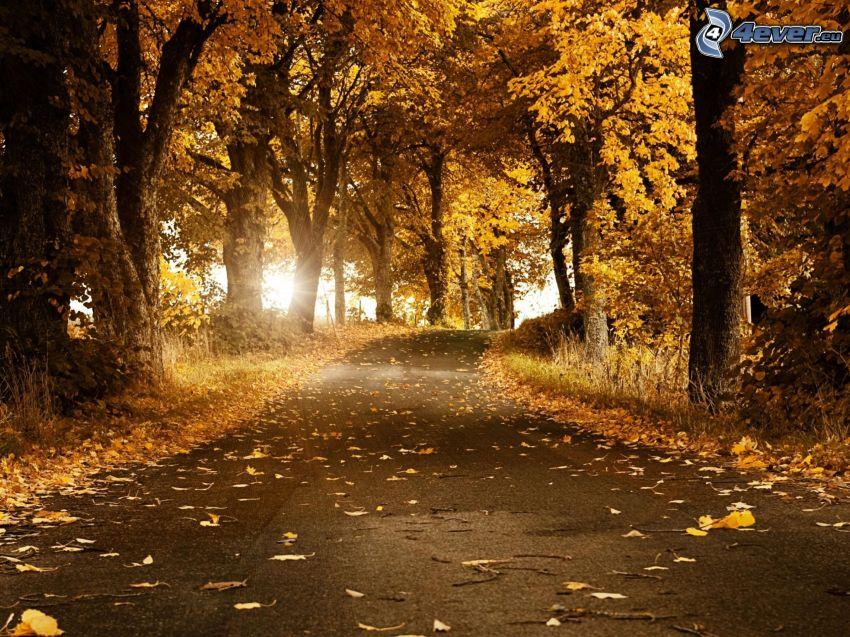 höstväg mellan träden, skog, gula löv