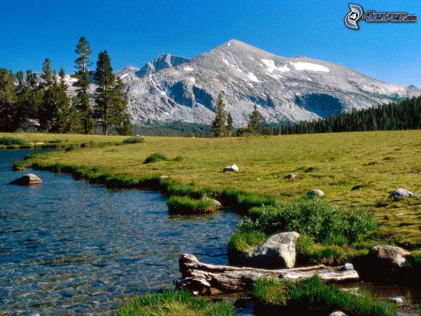 landskap, berg, skog, kulle, äng, bäck