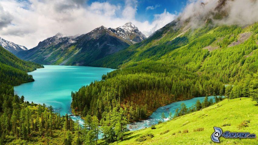 landskap, berg, skog