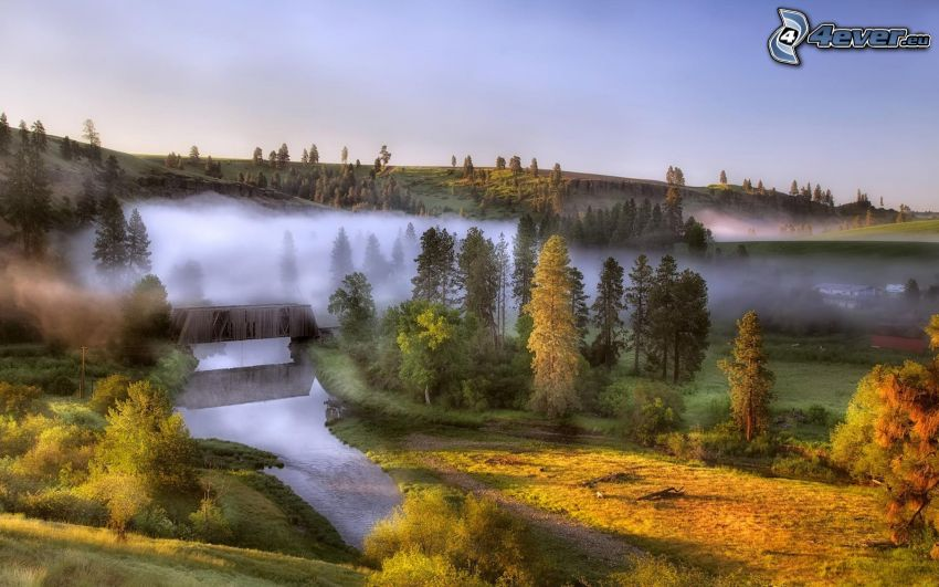 landskap, flod, träd, ånga