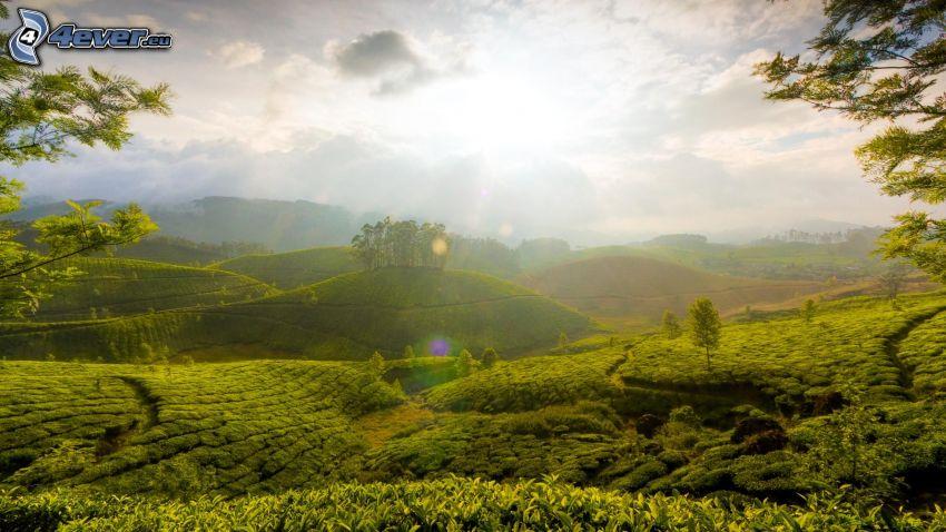landskap, grönska, kullar