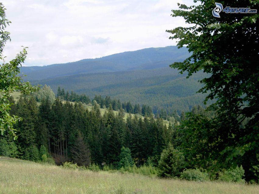 landskap, natur