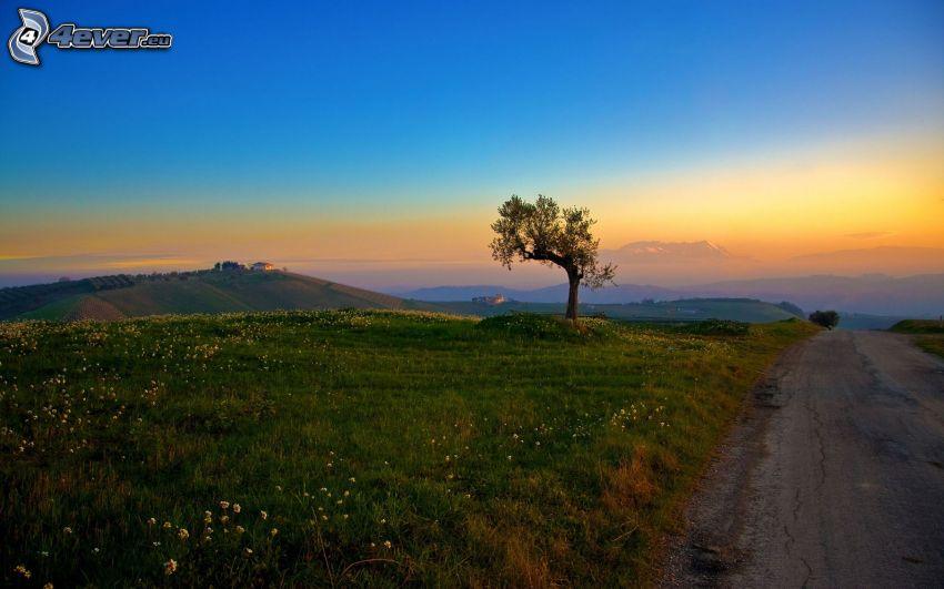 landskap, träd, gräs, kvällsjus