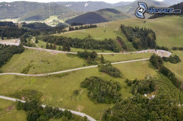 landskap, väg, skog