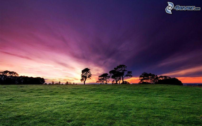 lila himmel, efter solnedgången, siluetter av träd, grönt gräs