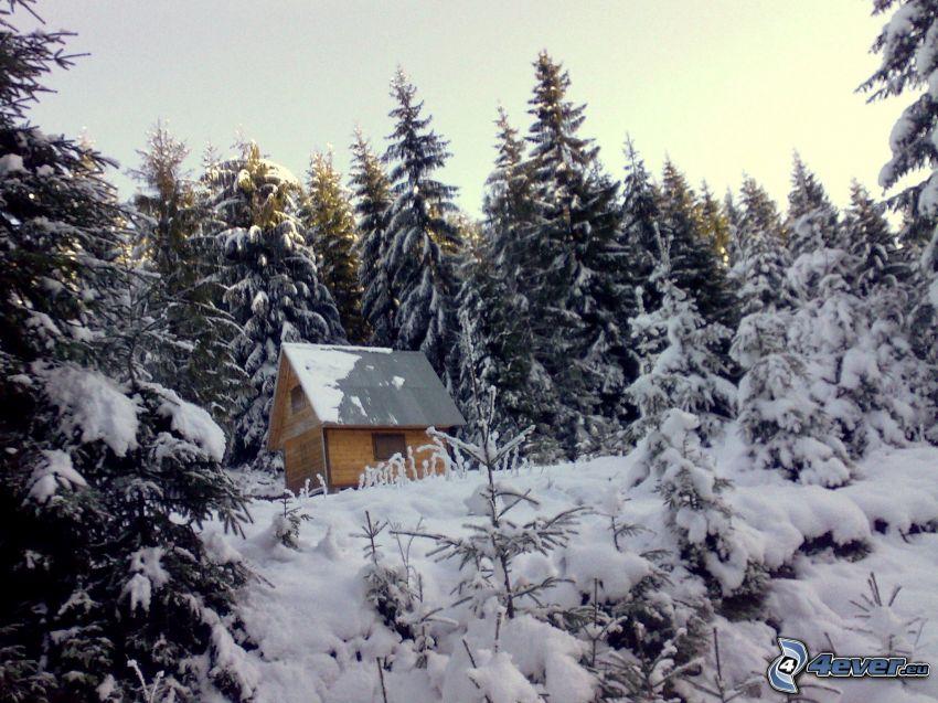 liten fjällstuga, snöig skog, barrskog, gran