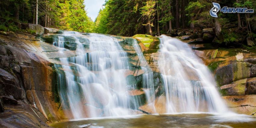 Mumlavsky vattenfallet, skog