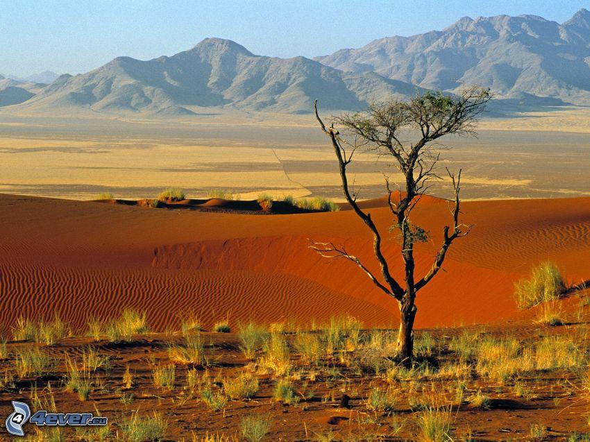 NamibRand, Namibia, öken, ensamt träd, torrt träd, träd i öknen, bergskedja