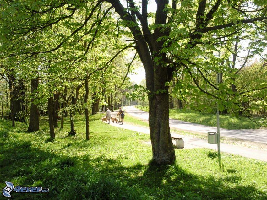 natur, park, promenad