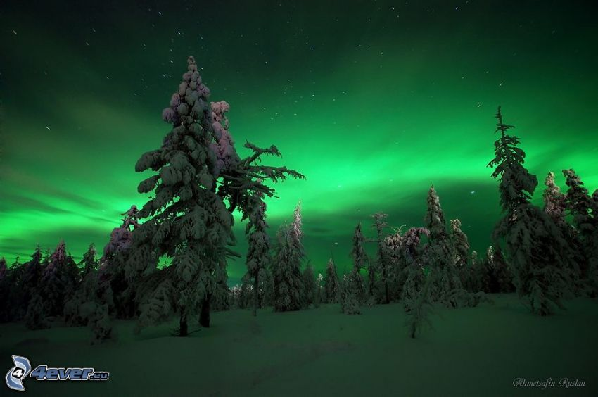 norrsken, snöig skog